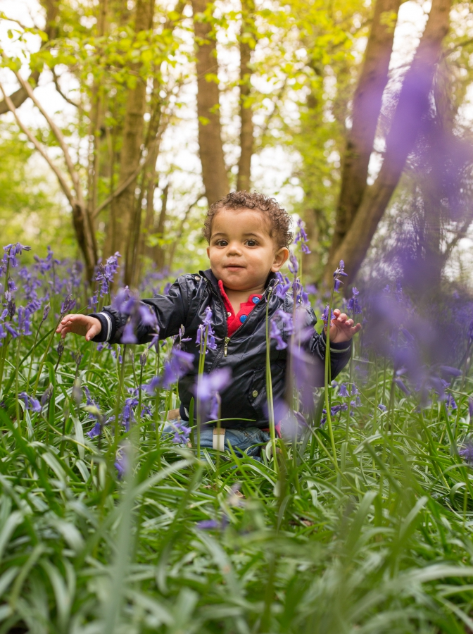 Offspring Photography Bluebell Woods Family Photo Session